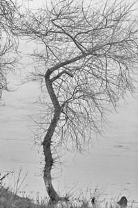 _MG_0081 -DxO-300dpi-©Ch  Mouton