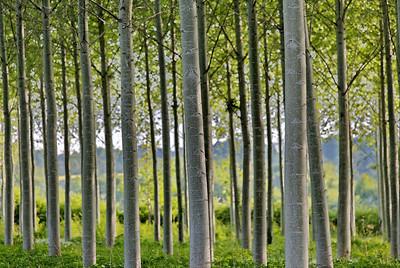 Coté arbres