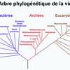 Arbre phylogénétique hypothétique de tous les organismes vivants.