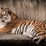 zoo-8403