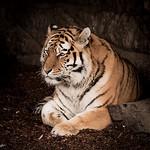 zoo-8402
