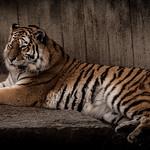 zoo-8405