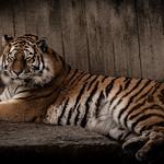 zoo-8404