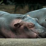 zoo-8409
