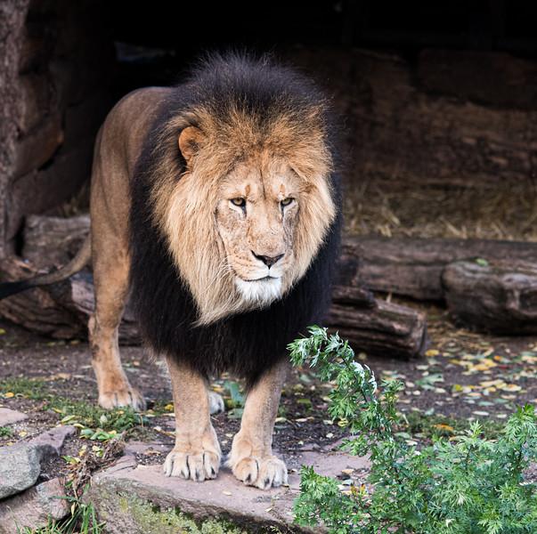 Zoo-5452