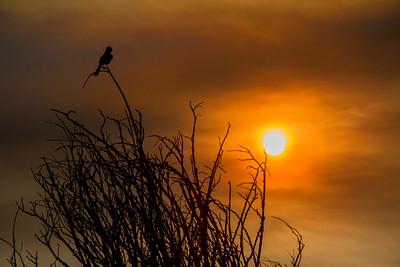 Saharan Dust Texas Sunset