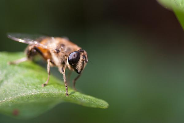 Fly on a leaf