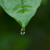 waterdrop from a leaf