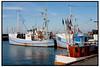 Fiskekuttere, Fiskerbåde og Trawlere i havnen i Gilleleje.  Foto: Torben Christensen  København ©