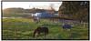 Heste ved Farum 2004.  Foto: Torben Christensen  København ©