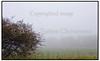 Busk i morgen tåge ved Kolle Kolle 2004.  Foto: Torben Christensen  København ©