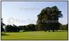Store træer oig græsplæne i Bernstorffsparken, Bernstorff Slotshave i Gentofte. . Foto: Torben Christensen  København ©