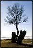 Nøgne træer uden blade ved en isdækket Esrum Sø  ved Esrum Søvej. Foto: Torben Christensen  København ©