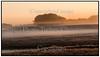 Dyrehaven, Eremitagen ved hjortekærsvej i solopgang med tåge og rød himmel. Foto: Torben Christensen  København ©