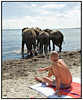 Lørdag den 4 august 2007 var det tid for Cirkus Arenas elefanter at få det traditionelle bad i Øresund ved Charlottenlund Strandpark. Men selvom solen skinnede og sommeren endelig var kommet, var vandet åbenbart stadig lidt for koldt så det blev ikke til megen badning. Det var mere fristende at rulle sig i det varme sand. Cirkus Arena har forestilling i Charlottenlund Strandpark lørdag og søndag inden turen går videre til Humlebæk. Foto: Torben Christensen  København ©