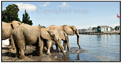 Arena Elefanter  bader 2007