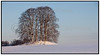 Landskaber, Landskabsbillede med marker, træer og gravhøje i nærhedena af Munkholmbroen<br /> .  Foto: Torben Christensen  København ©