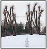 Stynede træer og sne i Frederiksberg Have