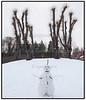 Snemand, Stynede træer og sne i Frederiksberg Have
