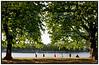 Kondi Løbere under nyudsprungne kastanietræer ved Peblinge sø