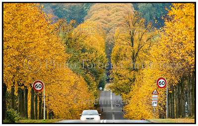 Efterår og gule blade ved Kattinge 2012
