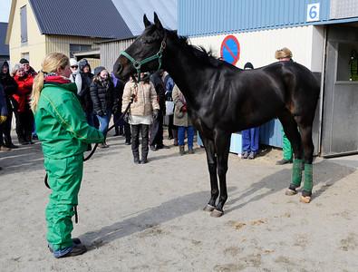 The Penny Horse - stall Peter Jardby | Stallbacksvisning Jägersro 130316 | Foto: Stefan Olsson / Svensk Galopp