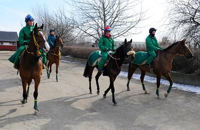 Hästar från stall Jardby efter ett jobb på Jägersros träningsbana | Stallbacksvisning Jägersro 130316 | Foto: Stefan Olsson / Svensk Galopp