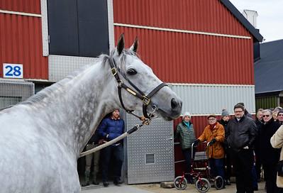 Stall Hallencreutz: Let'sgoforit | Stallrunda Jägersro 160319 | Foto: Stefan Olsson / Svensk Galopp