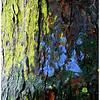 Beschilderde boom, Den Haag
