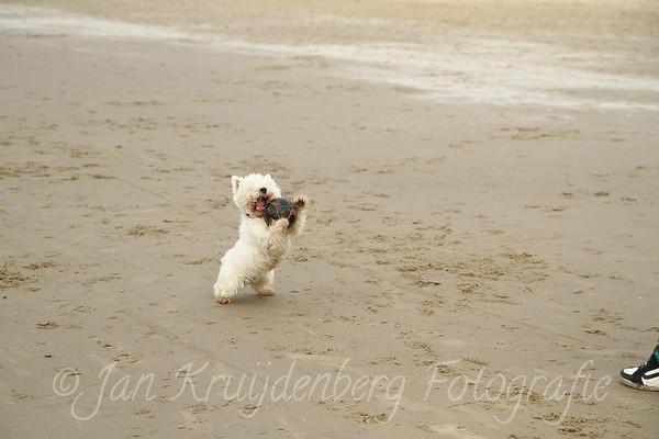 20110213 Blof op het Strand
