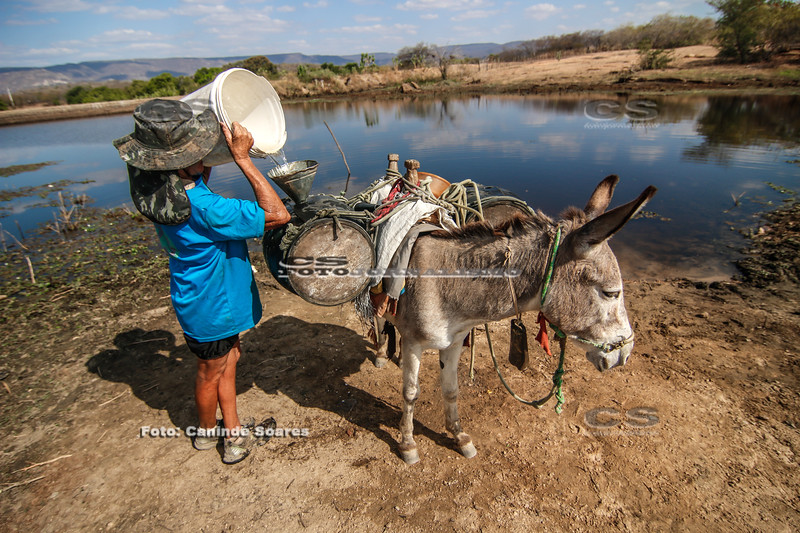 Transporte de água em jumento