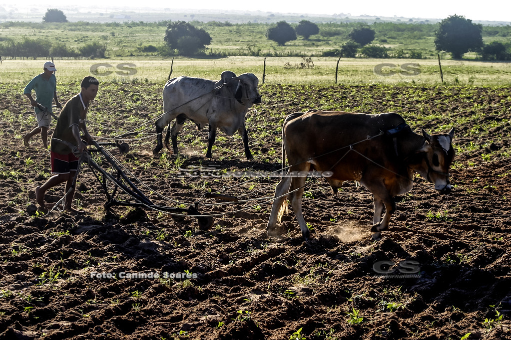 Arando a terra para plantio