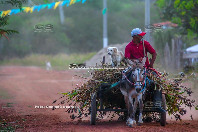 Transportando ração em carroça