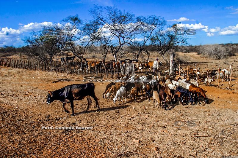 Rebanho de gado e ovelhas