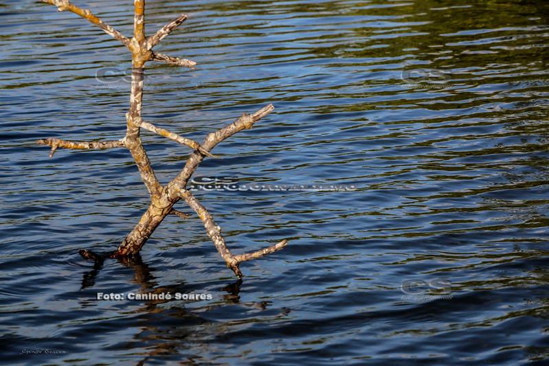 Galhos seco no rio