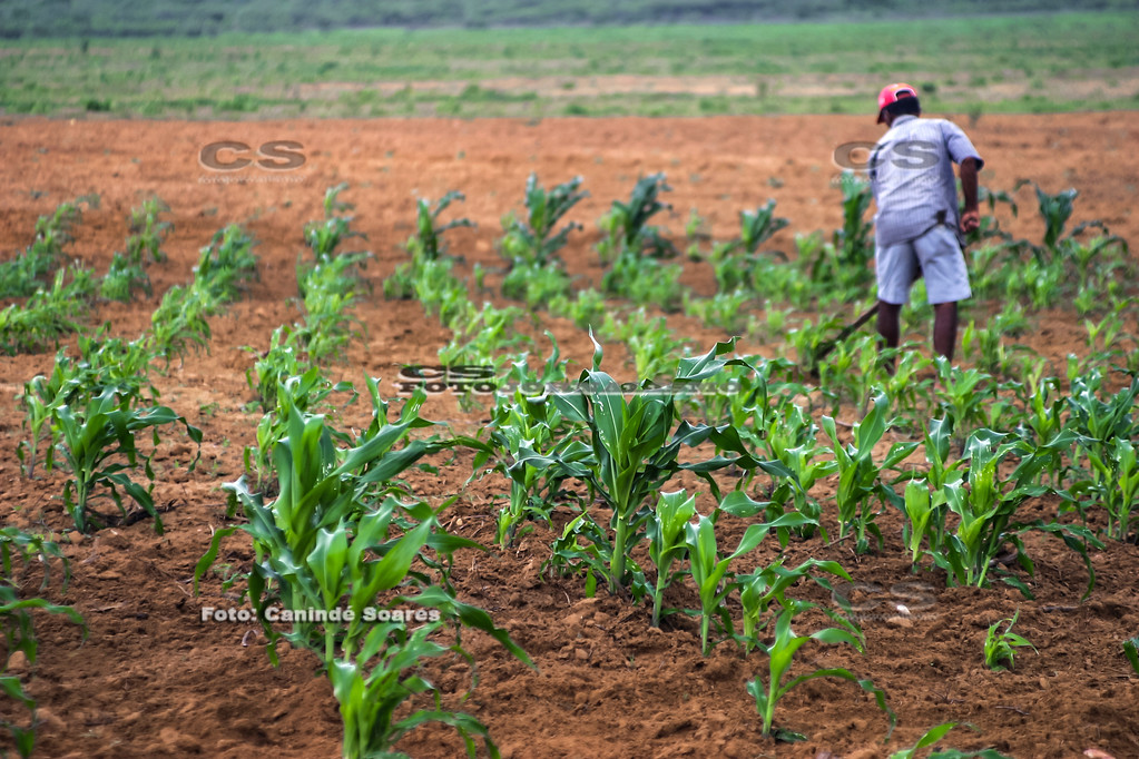Plantação de milho