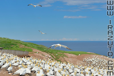 Ile Bonaventure - Gaspésie