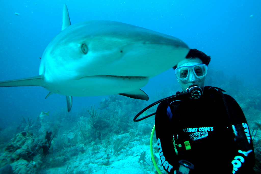 Shark Diving - Bahamas