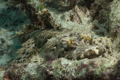 Crocodile Fish, Banda Sea, Indonesia