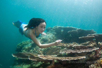 Rare sighting of a mermaid swimming over plate corals, Little Komodo, Trition Bay, Indonesia (thanks Hidy Yu)