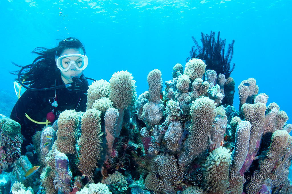 Diver with hard corals, Tubbataha Reef, Philippines