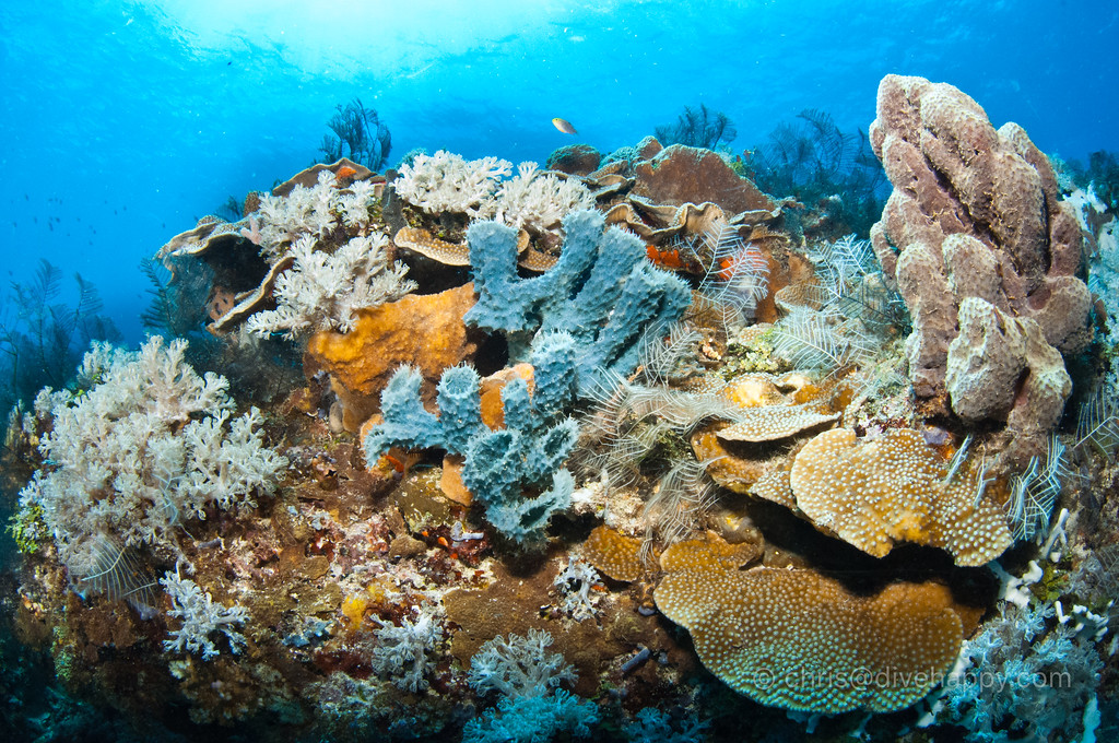 Warmari Reef, near Woka Lighthouse,  Cenderawasih Bay