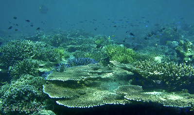 South Point Reef