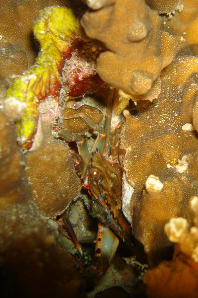 On a night dive, there are creatures hiding all around - it just takes a closer look.