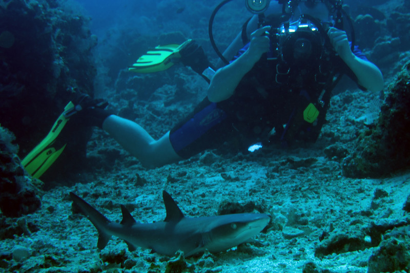 My buddy, Jeremy, showing how close the Carcharhinus amblyrhynchos (gray reef sharks) allowed us to get.