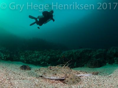 Diver and Monkfish