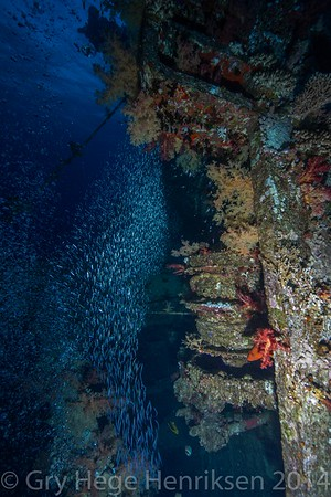 Wreck and glassfish