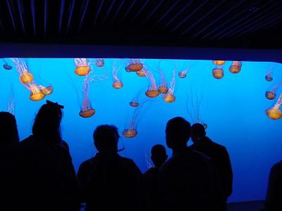 Monterey  Aquarium - Still more Jelly fish exhibit