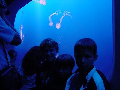 Monterey  Aquarium - Jelly fish exhibit