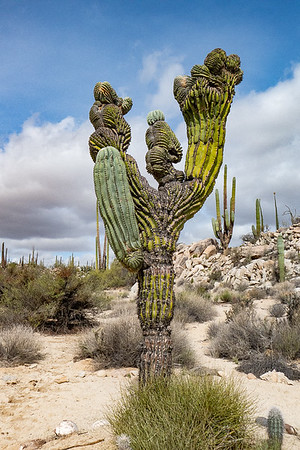 Now that is a Weird Cactus